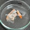エビの殻の顕微鏡写真