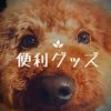 愛犬家必見!犬の健康のための便利グッズ5選