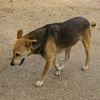 【一日一枚写真】インドの野良犬達【一眼レフ】