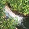 矢木羽湖 バス釣り 7月①(おまめ)