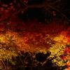 【kogasanaの写真素材集】紅葉ライトアップ(京都)⑥