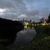 皇居、そして横浜港。耐暑ランとボス猫とカモメの週末