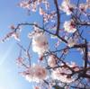 新月一斉「目覚めの花宴」ご案内