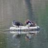 鶴見緑地公園の野鳥たち。