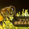 ミツバチが少女と一夜を共にする仲に ミツバチに感情はあるのか?