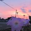 浜ちゃん日記       台風12号の接近と茜に染まった西の夕空