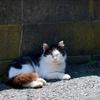 【猫の楽園】田代島を撮影:後編