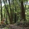 EOS 90D 森でテスト撮影
