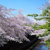 4月3日(水)目黒の立ち食いそばと、白金台の桜。