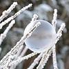 【凍結肺移植】自然周期とホルモン補充周期ってどっちがいいの?