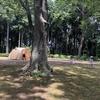 キャンプ場ランキングと本当に好きなキャンプ場とその要因に気づけた話。