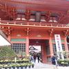なぜ神社で菊の品評会をするのか。起源は茨城県にあった!