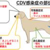 コアワクチン① 『犬ジステンパーウイルス』