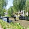 白川の一本橋(行者橋)。柳並木の光景。