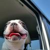 犬の車酔い対策をして楽しい旅行を!