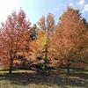 紅葉シーズンはじまりの神戸森林植物園、2017。