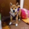 日本犬の祭典 ZIPANG2019
