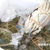 魚介類の方言