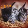 猫3匹と暮らしてみてそれぞれの性格の違いがよく分かった話