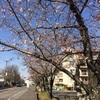 エステサロンの前が桜並木で綺麗です