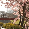 桜へのお誘い