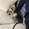 まりも物語:(番外編)犬の腎不全、食生活の工夫