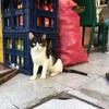 サンティアゴの観光に便利で治安も○なホテル。そして小さな苦悩(世界の猫探し270~272匹目)