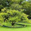 浜離宮恩賜庭園の「水明」by 妹島和世 @東京都中央区浜離宮庭園