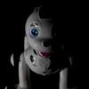 戌のロボット購入記 AIBOとかどうだろうって思ってたのに…