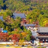 京都・御室 - 双ヶ丘から望む秋の仁和寺