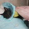 1年前の7月、愛猫に扁平上皮癌が見つかった⑥