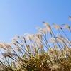 秋の七草を飾って季節を楽しむ