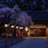 京都・北野 - 薄闇に浮かぶ魁桜