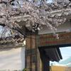 満開の桜🌸『田安門と千鳥ヶ淵』