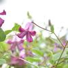 ティンカーベルに似合うお花です
