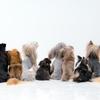 犬種についてのテイルの個人的な見解!