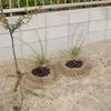 小さな苗木植栽~ 庭東側 ~