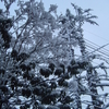 『雪の花・・・?』