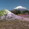 富士芝桜と富士山