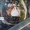 色違いケムッソが渋谷でトトロを発見!?【ポケモンGOAR写真】LOEWE×となりのトトロ