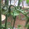 [今日の園芸]お庭で野菜を育てると、雨も悪くないと思うようになる。