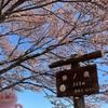 2021.4.21棒ノ折山
