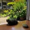 月に一度の猫砂総交換と庭猫プーチンさん