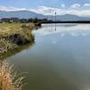 正覚池(和歌山県紀の川)