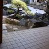 子連れの初詣 住吉大社と大阪天満宮