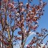 「佐久の季節便り」、「いろんな桜」、観察を楽しもう…。