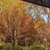 紅葉キャンプはひたすら焚き火(キャンプアンドキャビンズ那須高原)