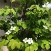 ガーデニング観察 花盛り
