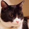 今日の黒猫モモ&白黒猫ナナの動画ー690