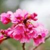 春の香りとバカと風邪